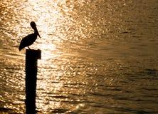 восход солнца пеликана Стоковое Фото