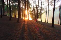 восход солнца природы ландшафта состава Стоковые Изображения