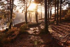 Восход солнца природы осени между деревьями Стоковая Фотография