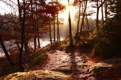 Восход солнца природы осени между деревьями Стоковое Изображение