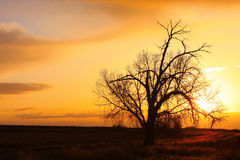 восход солнца раннего утра страны Стоковая Фотография RF