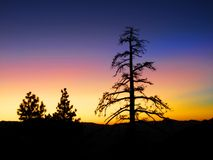 восход солнца сосенки пущи Стоковая Фотография