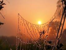 Восход солнца с каплями росы стоковое фото rf