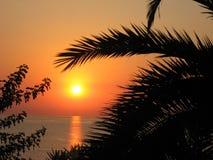 Восход солнца с силуэтом пальмы стоковые изображения rf