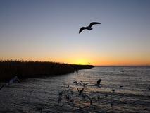 Восход солнца таза озера Juyan стоковое фото rf