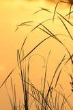 восход солнца травы лезвий стоковая фотография rf