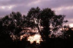 Восход солнца утра над рекой Waipa в Новой Зеландии стоковые изображения rf