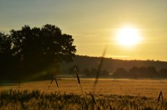 Восход солнца утра на кукурузном поле стоковое изображение
