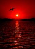 восход солнца чайки Стоковая Фотография