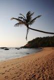 восход солнца goa пляжа тропический стоковая фотография rf