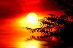 восход солнца папоротников Стоковая Фотография RF