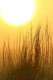 восход солнца силуэта травы Стоковое фото RF