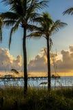 Восход солнца Атлантического океана через пальмы Стоковые Фотографии RF