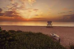 восход солнца ладони пляжа стоковое фото rf