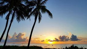 восход солнца ладони пляжа Стоковые Фотографии RF