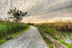 Восход солнца болотистых низменностей - аллигатор на предохранителе Стоковое Изображение RF