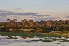Восход солнца в амазонских джунглях, Манаус, Бразилии Стоковые Фотографии RF