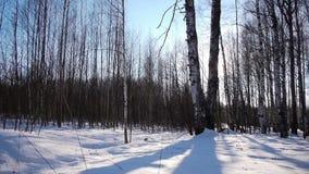 Восход солнца в лесе зимы акции видеоматериалы