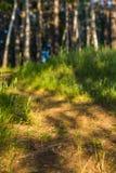 Восход солнца в лесе, след, природа, предпосылка Стоковое Изображение