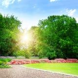 красивейший парк лета стоковое изображение rf