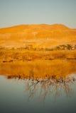 Восход солнца в мертвом море Стоковая Фотография RF