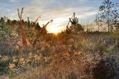 Восход солнца в морозном утре Стоковые Изображения RF