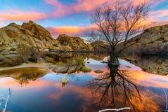 Восход солнца в национальном парке дерева Иешуа Стоковое Фото