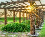 Восход солнца в парке стоковая фотография