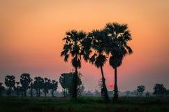 Восход солнца в полях Таиланда Стоковое Изображение RF