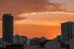 Восход солнца в Рио Стоковое Изображение RF