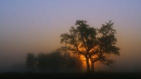 Восход солнца в тумане и дереве Стоковое Фото