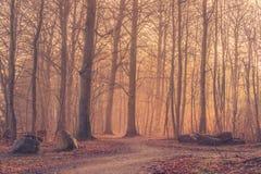 Восход солнца в туманном лесе с большими утесами Стоковое Фото
