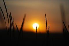 Восход солнца в утре, восход солнца в кусте Стоковые Изображения RF