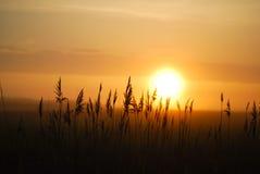 Восход солнца в утре, восход солнца в поле Стоковая Фотография