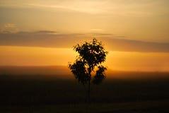 Восход солнца в утре, восход солнца в поле Стоковые Изображения RF