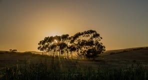 Восход солнца в Overberg Стоковые Фото
