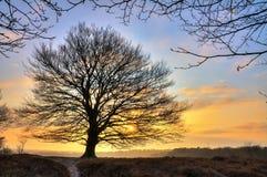 Восход солнца дерева зимы Стоковые Изображения RF