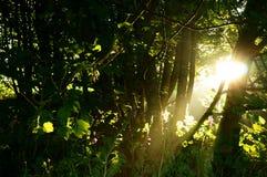 Восход солнца a дерева солнечного света Стоковое Изображение RF