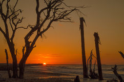 Восход солнца залива ботаники Стоковые Фото