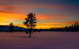 Восход солнца зимы с уединённым небом дерева и апельсина Стоковое Изображение