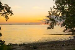 Восход солнца мангровы Стоковое фото RF
