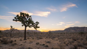 Восход солнца национального парка дерева Иешуа Стоковая Фотография
