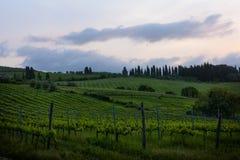 Восход солнца над виноградниками Стоковые Фотографии RF