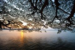 Восход солнца над гаванью Kochi, Кералой Стоковые Фотографии RF