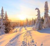 Восход солнца над горой, лесом и снегом Стоковое Изображение RF