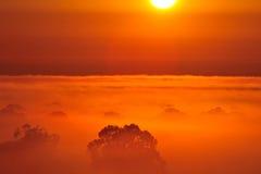 Восход солнца над деревом в облаках Стоковые Фото