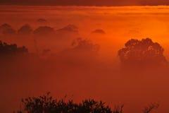 Восход солнца над деревом в облаках Стоковое Изображение