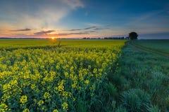 Восход солнца над зацветая полем рапса Стоковая Фотография RF