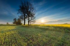 Восход солнца над зацветая полем рапса Стоковые Изображения RF