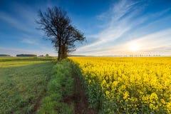 Восход солнца над зацветая полем рапса Стоковые Фотографии RF